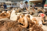 Kashgar animal market, Xinjiang Province, China