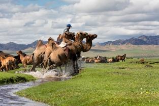 Mongol Els, Bulgan, Mongolia